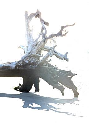 Photograph - Drift Wood by Captain Debbie Ritter