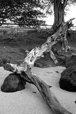 Photograph - Drift Wood by Gary Gunderson