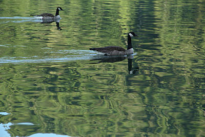 Photograph - Drifting Geese by Marie Leslie