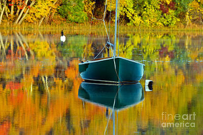 Photograph - Adrift In Color IIi by Butch Lombardi