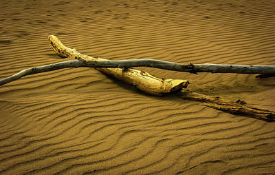 Photograph - Driftwood 2 by Elijah Knight