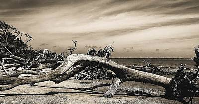 Photograph - Driftwood 3 by Elijah Knight