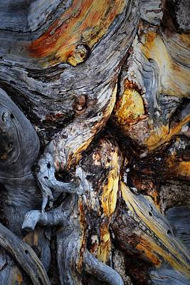 Photograph - Driftwood Abstract by Nadalyn Larsen