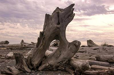 Photograph - Driftwood Along Dungeness Spit by NaturesPix