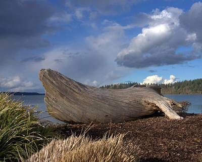 Photograph - Driftwood And Cloudy Sky by Patricia Strand