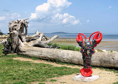 Photograph - Driftwood And Lobster  by Janice Drew
