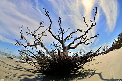Driftwood And Roots Hunting Island Sc Art Print