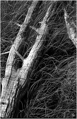 Photograph - Driftwood And Sawgrass Monochrome by Wayne King