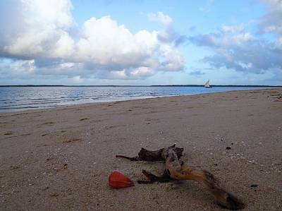 Exploramum Wall Art - Photograph - Driftwood And Shell On The Beach by Exploramum Exploramum