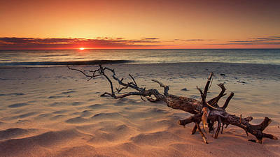 Photograph - Driftwood And Unbelievable Ocean Sunrise At Nauset Beach by Dapixara Art