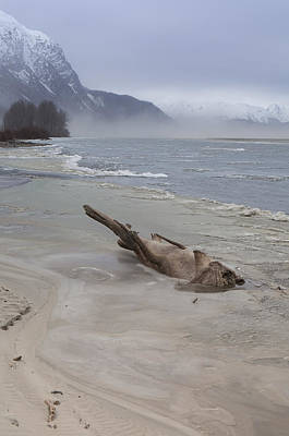 Photograph - Driftwood Animal by Michele Cornelius
