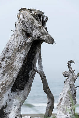 Photograph - Driftwood Animals by Louise Magno