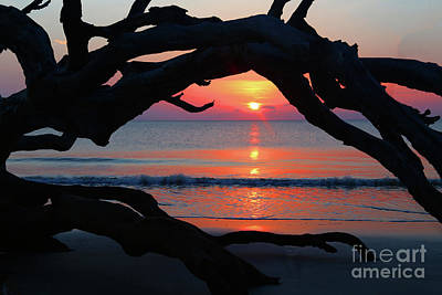 Photograph - Driftwood Arch by Marty Fancy