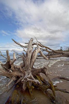 Photograph - Driftwood At Black Rock by Robert Och