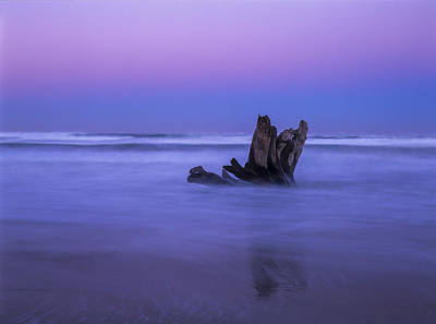Photograph - Driftwood At Dawn by Robert Potts