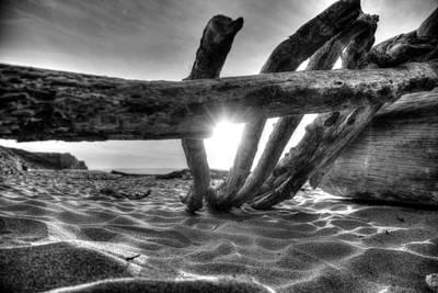Photograph - Driftwood B/w by Michael Damiani