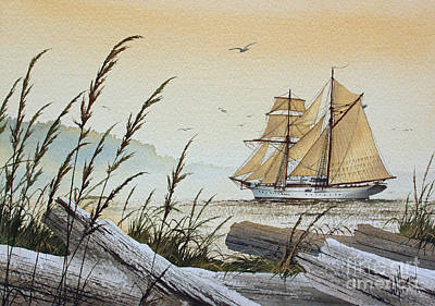 Driftwood Bay Art Print by James Williamson