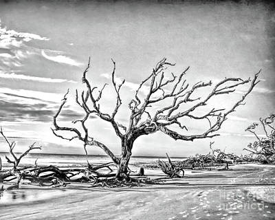 Photograph - Driftwood Beach - Black And White by Kerri Farley