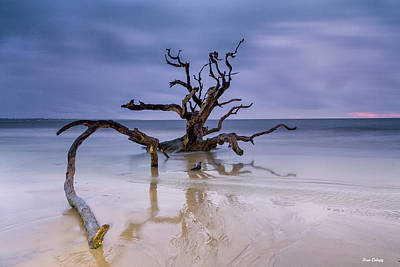 Photograph - Driftwood Beach by Fran Gallogly