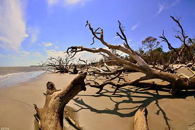 Photograph - Driftwood Beach Hunting Island Beaufort Sc by Lisa Wooten