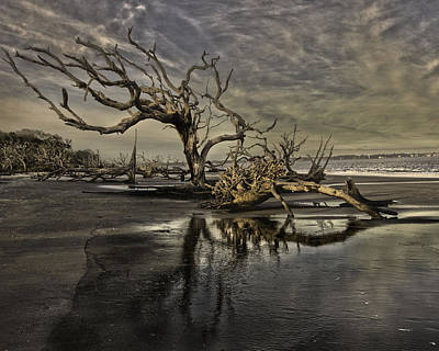 Driftwood Beach Art Print
