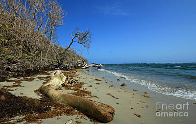 Photograph - Driftwood Beach by Mary Haber
