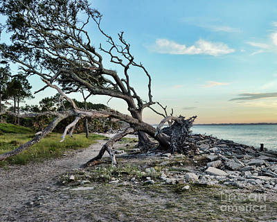 Photograph - Driftwood Beach Morning by Kerri Farley