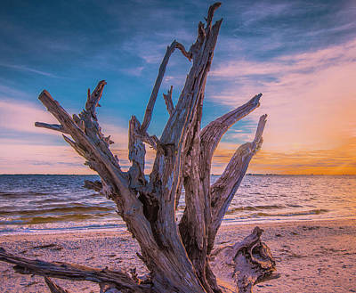 Photograph - Driftwood Beach by Steven Ainsworth