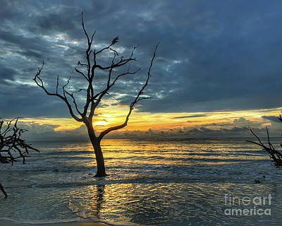 Photograph - Driftwood Beach Sunrise Jekyll Island Georgia by Kerri Farley