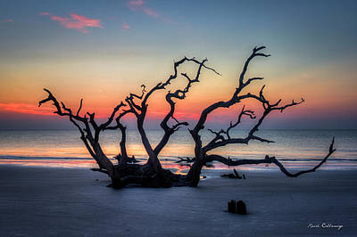 Photograph - Driftwood Beach Sunrise Jekyll Island Georgia by Reid Callaway