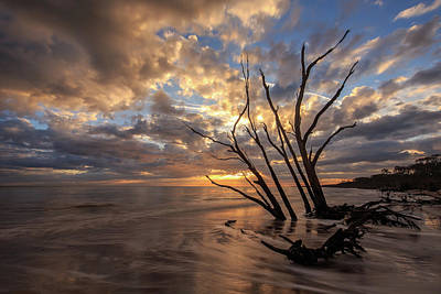 Photograph - Driftwood Beach Sunrise by Stefan Mazzola