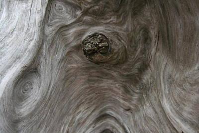 Photograph - Driftwood Break by Dylan Punke