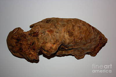 Photograph - Driftwood Burl by Larry Bacon