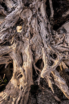 Photograph - Driftwood Close-up by Steven Ainsworth