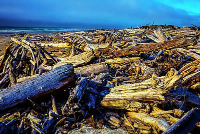 Weatherworn Photograph - Driftwood Coastline by Garry Gay