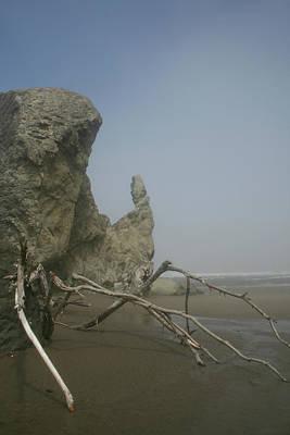Photograph - Driftwood Crawl by Dylan Punke