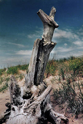 Photograph - Driftwood Cross At The Beach by Nancy Griswold