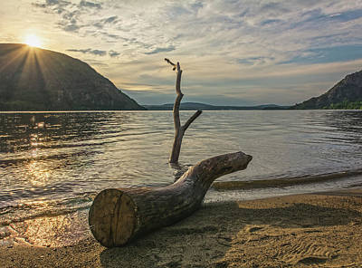 Photograph - Driftwood Directional by Angelo Marcialis