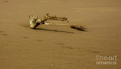 Photograph - Driftwood by Elijah Knight