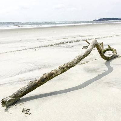 Photograph - Driftwood by Flavia Westerwelle