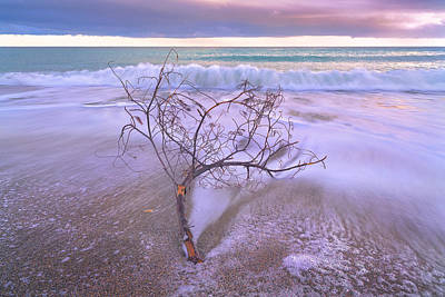 Photograph - Driftwood by Giovanni Allievi