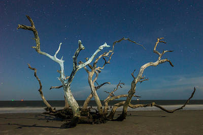 Photograph - Driftwood Hydra Under Stars by Chris Bordeleau
