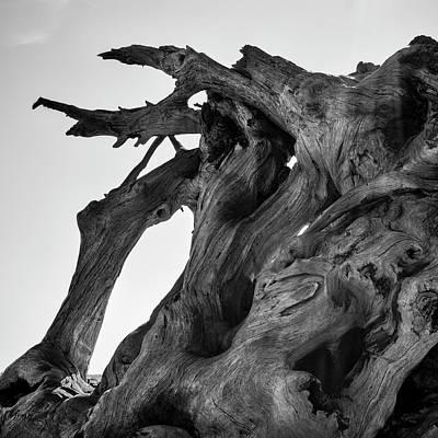 Photograph - Driftwood I Sq Bw by David Gordon