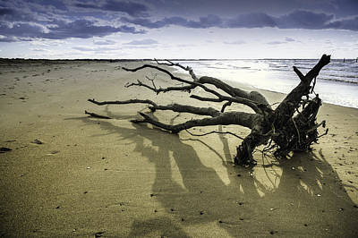 Photograph - Driftwood IIi by Pete Federico