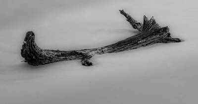 Driftwood Photograph - Driftwood In Sand In Black And White by Greg Mimbs