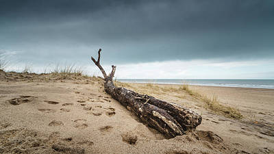 Photograph - Driftwood by James Billings