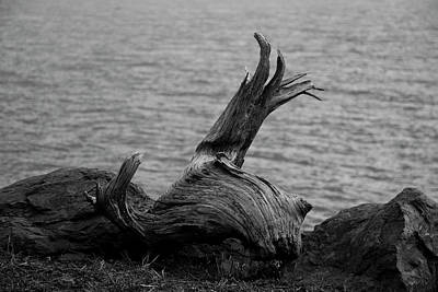 Photograph - Driftwood by Jeff Severson
