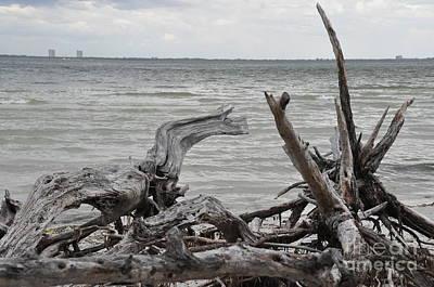 Photograph - Driftwood by John Black