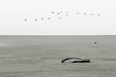 Lone Pelican Photograph - Driftwood Log And Birds - A Gray Day On The Beach by Christine Till