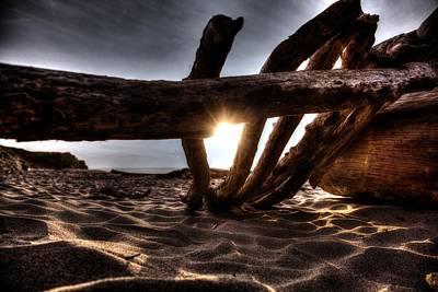 Photograph - Driftwood by Michael Damiani